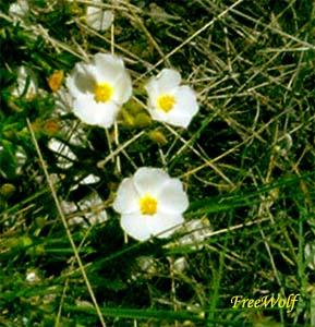20070121035013-florecillas.jpg