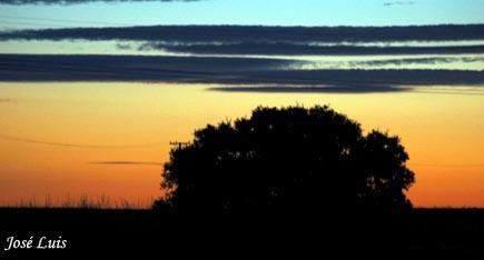 20070719234332-luztardia.jpg