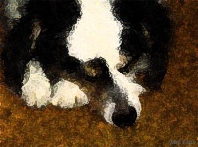 20080118033824-perrosladran.jpg