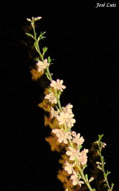 20080323022513-floresnocturnas.jpg