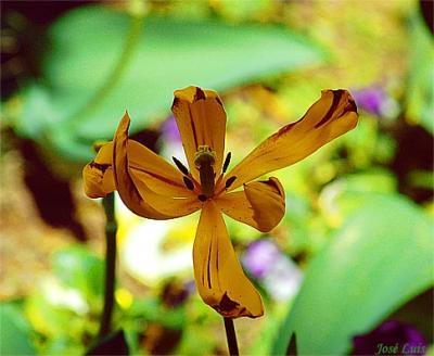 20080517010728-florabierta.jpg