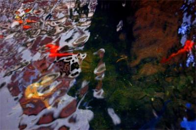 20081114164652-gritosagua.jpg