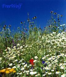 Flores_1.JPG