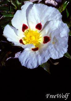 20060401010813-flor.jpg