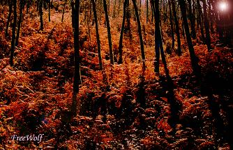 20060428211326-bosque.jpg