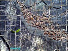 20060613005531-tronco.jpg