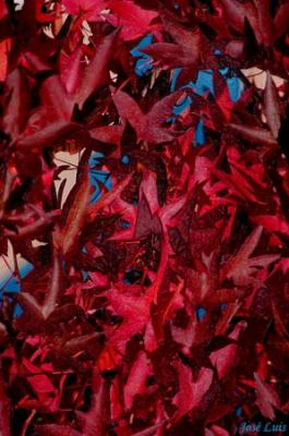 20071112011234-fraganciapurpura.jpg